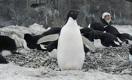 11 друзей Анарбека в гостях у пингвинов